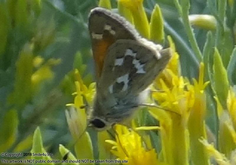 206611_watermarked_butterfly.jpg