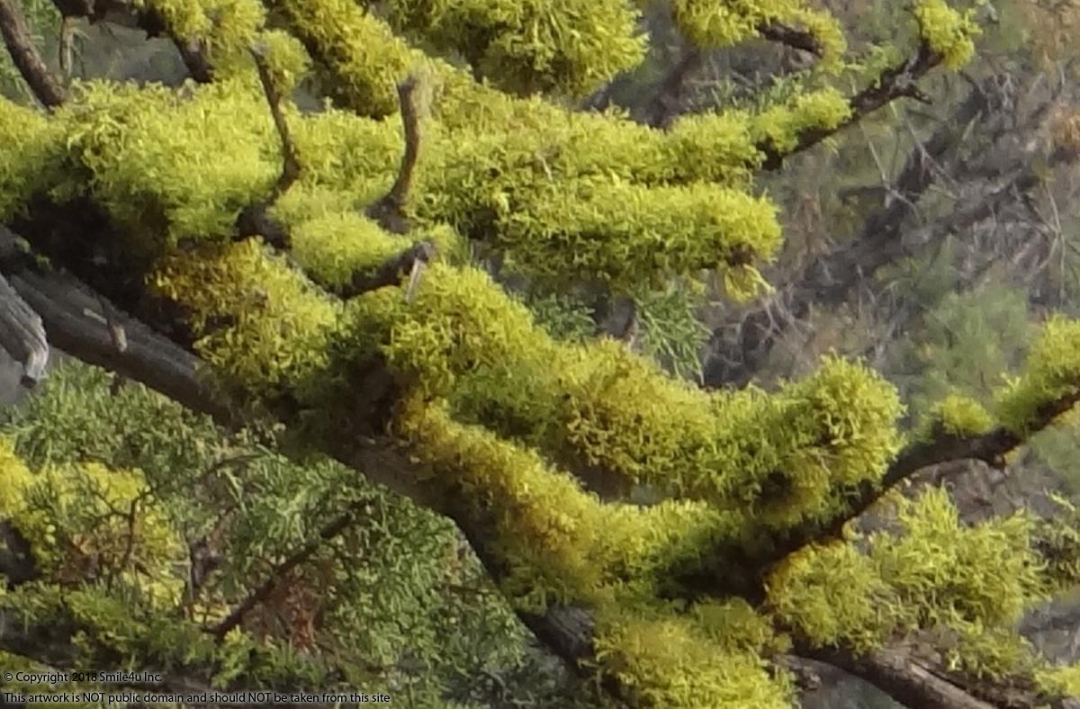 228006_watermarked_moss.jpg