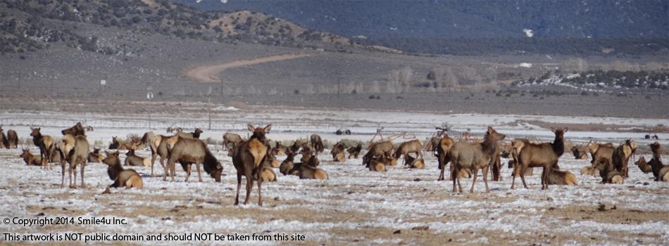548297_watermarked_elkherdfortgarland4.jpg