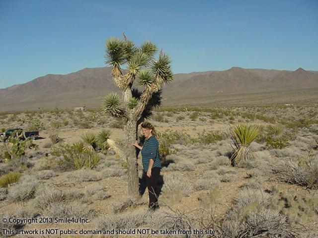 Char the Explorer showing the size of a Joshua Tree on this Lot for sale in the Lake Mead Ranchos in Mohave County, Arizona