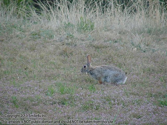 851135_watermarked_animals and golf course 012.jpg