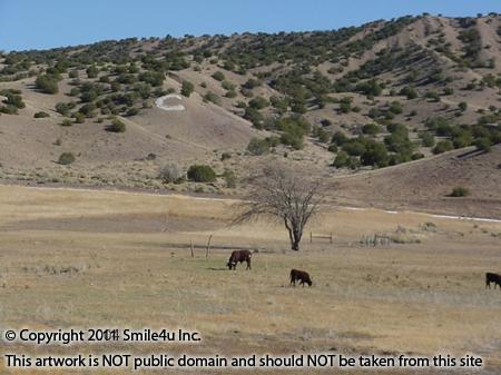 949078_watermarked_concho3.jpg